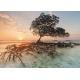 Red Mangrove - Cayos Cochinos Honduras