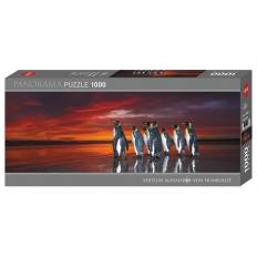 King Penguins - Falklands UK