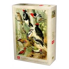 Encyclopedia Woodpecker