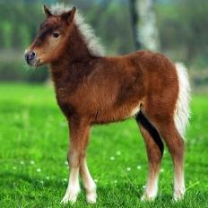 Ponyfreundschaft