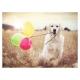 Luftballonparty