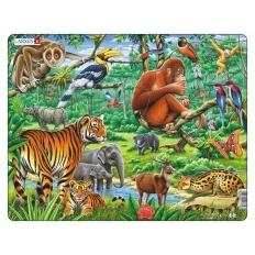 A Vibrant Asian Jungle