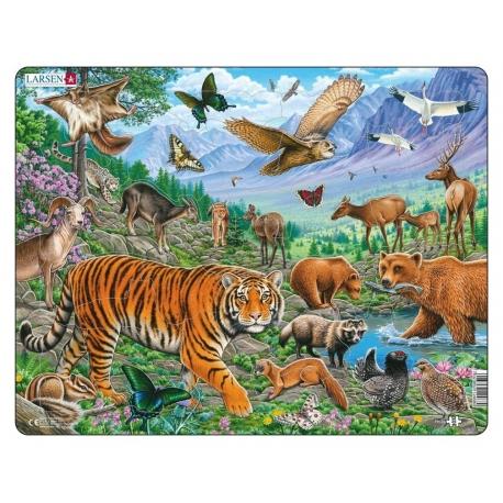 The Amur Tiger in Siberian Summer