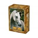 Posierendes Pferd
