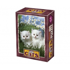Kätzchen - Wir warens nicht