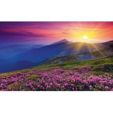 Bergwiese im Morgenrot