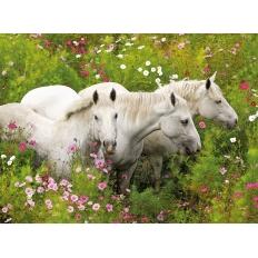 Pferde auf der Blumenwiese