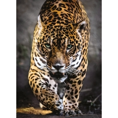 Walk of the Jaguar