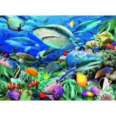 Riff der Haie