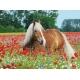 Pferd im Mohnfeld